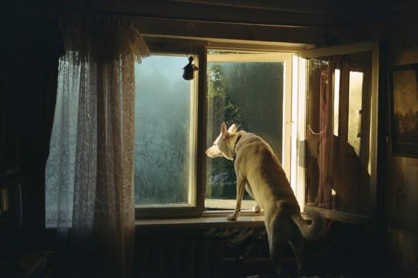 Лучшая концептуальная фотография 2014: Karina Kepule – Sit Still #photography  #conceptual